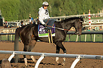 ARCADIA, CA  OCTOBER 26: Breeders' Cup Mile entrant Bolo, trained by Carla Gaines, exercises in preparation for the Breeders' Cup World Championships at Santa Anita Park in Arcadia, California on October 26, 2019. (Photo by Casey Phillips/Eclipse Sportswire/CSM)