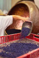 Europe/France/Midi-Pyrénées/31/Haute-Garonne/Toulouse: Confiserie - Fabrication des violettes de Toulouse à la Société Candiflor