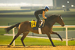 DUBAI,UNITED ARAB EMIRATES-MARCH 29: Trais Fluors,trained by Andre Fabre,exercises in preparation for the Dubai Turf at Meydan Racecourse on March 29,2018 in Dubai,United Arab Emirates (Photo by Kaz Ishida/Eclipse Sportswire/Getty Images)