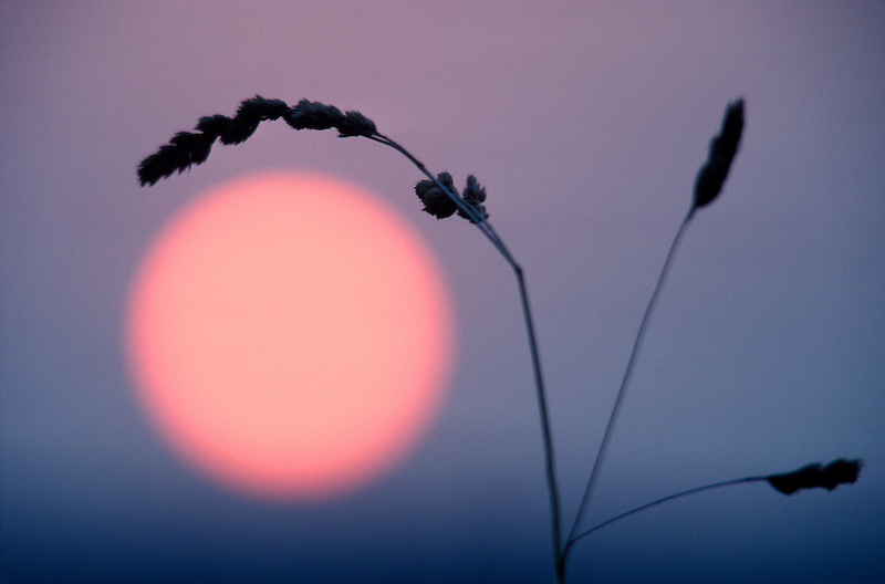 Sunrise with grass. Monroe, Oregon.