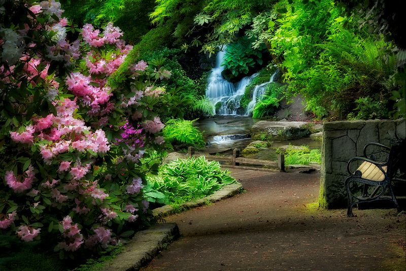 Rhododendrons, path and waterfall in gardens. Crystal Springs Rhododendron Gardens, Oregon