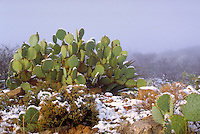 Cactus in winter.