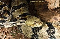 0601-0902  Timber Rattlesnake (Canebrake Rattlesnake), Crotalus horridus  © David Kuhn/Dwight Kuhn Photography
