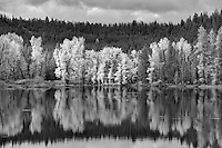 Cottonwood trees reflected in Snake River at Oxbow Bend. Grand Teton National Park, WY