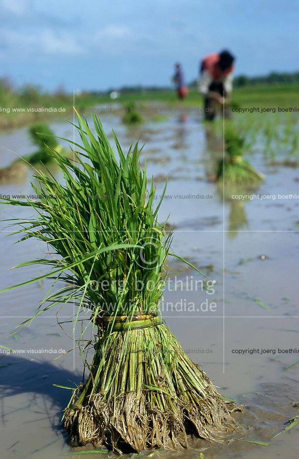 PHILIPPINES, Negros, rice cultivation, farmer replant rice samplings in flooded paddy field / PHILIPPINEN, Negros, Reisanbau, Bauern pflanzen Reissetzlinge in einem bewaesserten Feld um