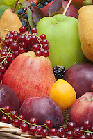 Harvested fruits and berry, apples malus, pears pyrus, persimmon, currants, grapes, blackberries,  in autumn fall in basket, green apple is Lord Derby, small red in front are Spartan, large red is Akane.
