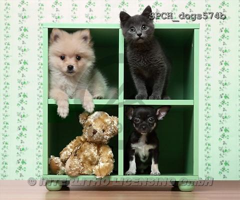 Xavier, ANIMALS, dogs, photos(SPCHdogs574b,#A#) Hunde, perros