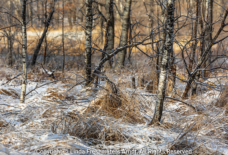Wetland after an ice storm in northern Wisconsin.