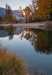 Yosemite National Park, CA: Calm reflections and fall colors along the Merced River with sunset light on Sentinel Dome in the distance.