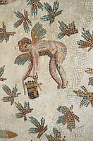 Picture of a Roman mosaics design depicting cupids picking grapes, from the ancient Roman city of Thysdrus. 3rd century AD, House of Dolphins. El Djem Archaeological Museum, El Djem, Tunisia.