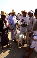 Yemen, Wadi Moor sheep market, Sheepers with ambiya and straw hat