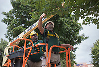 Bentonville Parks and Recreation staff Mike Van Horn (from left) and Jimmy Hutchison hang a string light, Friday, September 11, 2020 along the side of a tree at the downtown square in Bentonville. Bentonville Parks and Recreation have started hanging the roughly 37 miles of Christmas lights along the greenery at the square. That's approximately 390,000 lights. The plan is to complete the installation the week before Thanksgiving and the yearly Lighting of the Square. Check out nwaonline.com/200912Daily/ for today's photo gallery. <br /> (NWA Democrat-Gazette/Charlie Kaijo)