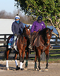 Ebeko, trained by trainer Peter Miller, exercises in preparation for the Breeders' Cup Juvenile Turf at 1Keeneland Racetrack in Lexington, Kentucky on November 3, 2020.
