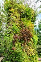 Festival International des Jardins de Chaumont-sur-loire 2012, murs végétaux de Patrick Blanc. (mention obligatoire du Festival des jardins de Chaumont-sur-Loire, pour usage presse et livre uniquement)