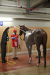 March 27 2021: Scenes from Meydan Racecourse, Dubai, UAE.<br />   Shamela Hanley/Eclipse Sportswire/CSM