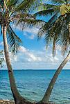 Two coconut trees on the edge of the lagoon in Funafuti, Tuvalu