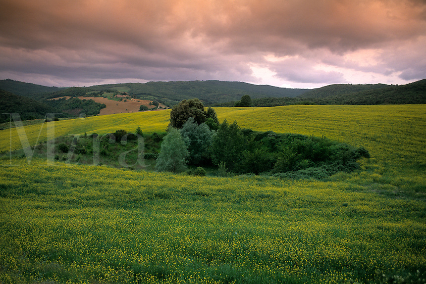 Beautiful fields of green and flowers in romantic Tuscany in Siena Ital
