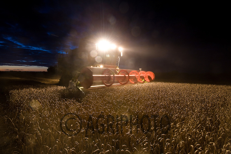 Harvesting Wheat at night at F C & H S Allen,Market Deeping,.Lincolnshire..Picture Tim Scrivener date taken 14th August  2011 .mobile 07850 303986 e-mail tim@agriphoto.com.....covering Agriculture in The United Kingdom.....