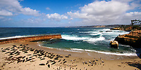 Famous La Jolla Cove with many harbor seals and birds resting on the beach, in front of the Pacific Ocean coastline and blue water, California USA