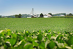 Hoffa Mill Road, Union County. Soy bean field and farm.