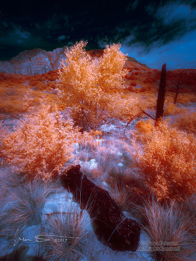 Two Cottonwoods in Jacks Canyon, Arizona (Infrared) ©2017 James D Peterson.  On a spring day, and with Lee Mountain serving as their backdrop, these two trees were basking in a beam of sunlight shining through broken clouds.  This landscape, though it has recovered substantially, still shows many signs of a wildfire that swept through it over a decade ago.