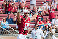 STANFORD, CA - OCTOBER 6, 2012:  Zach Ertz celebrates his touchdown during the Stanford Cardinal vs Arizona Wildcats game at Stanford Stadium. Stanford defeated Arizona 54-48 in overtime.