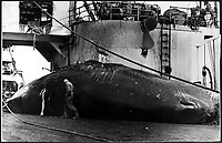 The MS Willem Barentz  ship Whale  hunting in <br /> Southern Arctic Sea <br /> : 1947