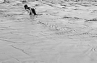 A young Boy is playing in a muddy water, from a big burst water pipe in the streets of Phnom Penh, Cambodia