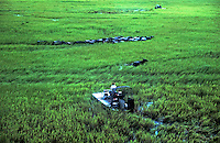 Aerial view of a Buffalo Muster with airboats on the wet plains of Northern Australia, Northern Territory