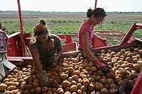 CROATIA, Belica, potato farming at Dodlek Agro / KROATIEN, Belica, Kartoffelanbau bei Dodlek Agro, Kartoffelernte, Frauen sortieren Steine auf der Grimme Rodemaschine aus