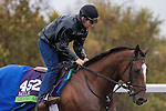 October 28, 2015:  Grand Arch, trained by Brian A. Lynch and owned by Jim Hill  & Susan Hill, exercises in preparation for the Breeders' Cup Mile at Keeneland Race Track in Lexington, Kentucky on October 28, 2015. Jon Durr/ESW/CSM