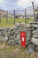 Post box at Great Langdale, Cumbria with Herdwick sheep and fells behind.