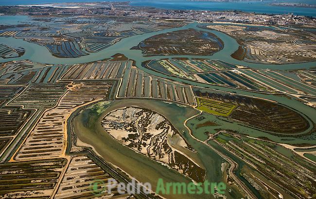 PUERTO REAL-PARQUE NATURAL DE LA BAHIA DE CADIZ-ANDALUCIA. 2008-04-05. (C) Pedro ARMESTRE