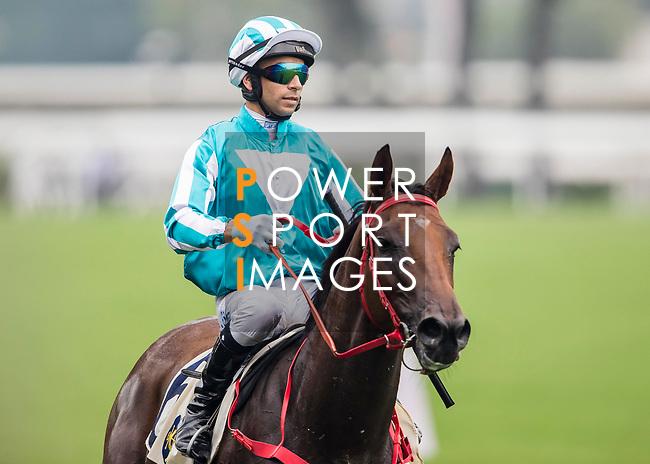 Horse Household King ridden by Joao Moreira wins the Race 4, Lung Wui Handicap, at the Sha Tin Racecourse on 03 September 2017 in Hong Kong, China. Photo by Marcio Rodrigo Machado / Power Sport Images