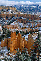 Ponderosa pines<br />