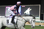 March 27, 2021: LORD GLITTERS (FR), #9 in the post parade for the Dubai Turf on Dubai World Cup Day, Meydan Racecourse, Dubai, UAE. Shamela Hanley/Eclipse Sportswire/CSM