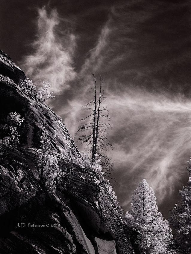 Skeletal Pines, West Fork of Oak Creek (Infrared)