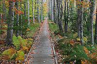 Strolling Through Autumn  #A90