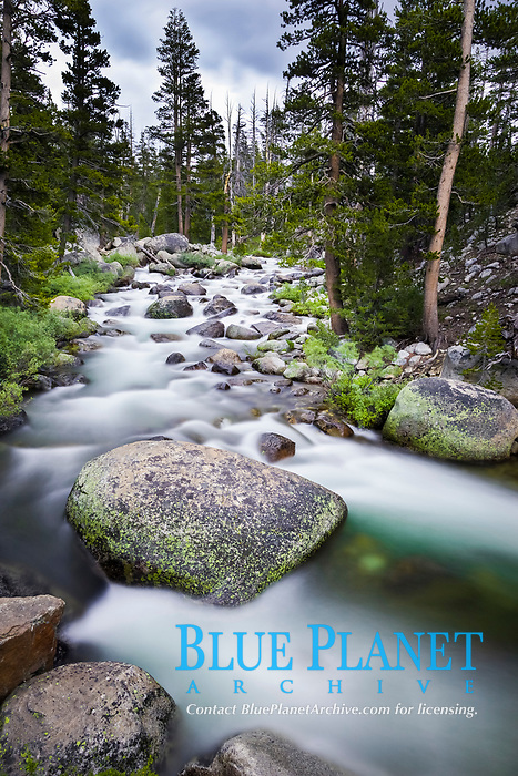 Dana Fork of the Tuolumne River, near Tioga Pass, Yosemite National Park, California, USA