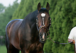 Preakness contender Mr. Commons looks up from his grazing on Thursday morning, May 19, 2011, at Pimlico Race Course in Baltimore, MD. (Joan Fairman Kanes/EclipseSportswire)