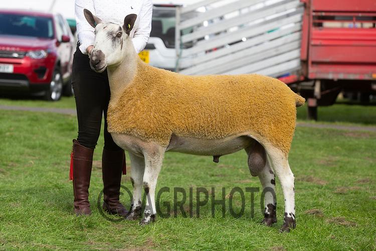 Kelso Ram Sale 2018<br /> Lot 401 bfl 6000gns C Campbell Easter Happrew<br /> ©Tim Scrivener Photographer 07850 303986<br />      ....Covering Agriculture In The UK....