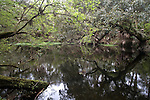 Hillsborough River State Park, Florida, West Central Florida