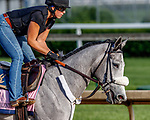 LOUISVILLE, KENTUCKY - MAY 01: Sailor's Valentine, owned by Semaphore Racing LLC and Homewrecker Racing LLC and trained by Eddie Kenneally, exercises in preparation for the Kentucky Oaks at Churchill Downs on May 1, 2017 in Louisville, Kentucky. (Photo by Jesse Caris/Eclipse Sportswire/Getty Images)