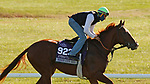 Windy City Red, trained by trainer Jonathan Wong, exercises in preparation for the Breeders' Cup Juvenile Turf Sprint at Keeneland Racetrack in Lexington, Kentucky on November 4, 2020.