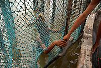 Pescadores artesanais utilizam o curral como armadilha e capturaram cerca de 200 quilos de pescado de várias espécies por dia como: piramutabas, sardinhas, filhotes, pescada amarela, robalo e tainhas.  A pesca é realizada na Reserva Extrativista  Marinha Mãe Grande no litoral do Pará, na foz do rio Amazonas.<br /> Curuçá, Pará, Brasil<br />  Foto: Paulo Santos <br />  17/05/2009