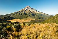 Taranaki , Mt. Egmont 2518m, living volcano and alpine vegetation, Egmont National Park, North Island, New Zealand, NZ
