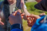 Grass Identification workshop with Michelle Cooper, by California Native Grassland Association