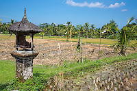 Bali, Indonesia.  Shrine to the Rice Goddess Sri in a Rural Rice Field.