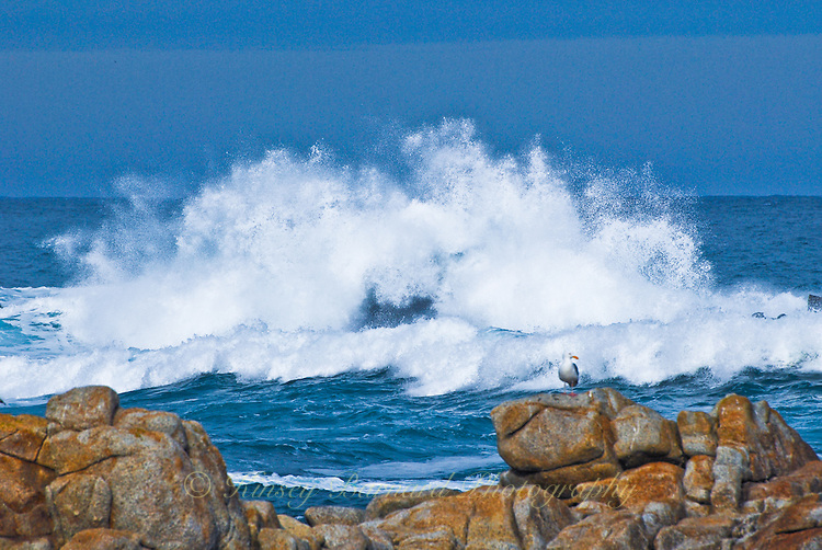 """""""CALIFORNIA UPRISING""""<br /> <br /> Powerful winter waves rise into the deep blue sky as they smash against the rocks near Monterey, California as a tiny seagull looks on. Winter surf provides some of the most dramatic seascape photography you will ever see."""