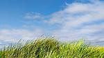 Dunes, grass, blue sky mark the pacific ocean beach at South Beach State Park, Newport, Oregon
